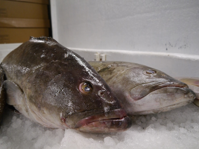 Wicked Tuna tour fish