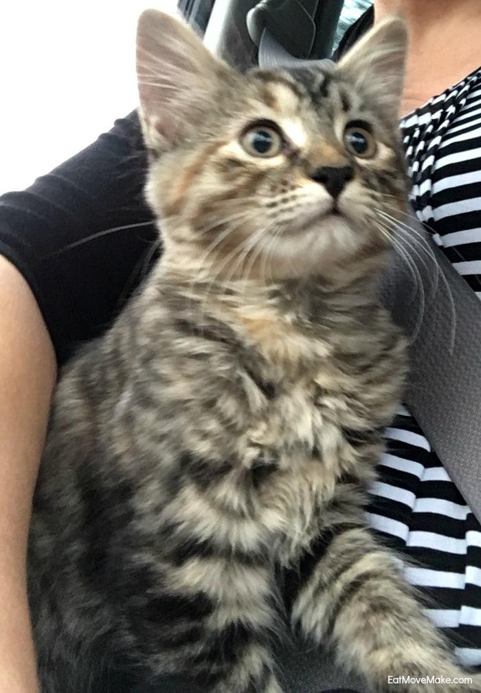 Pinot - my kitty