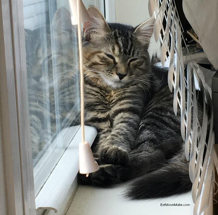 Pinot sleeping by window