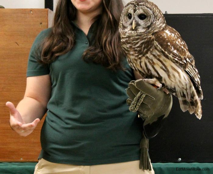 barred-owl-lees-mcrae-wildlife-rehab-center