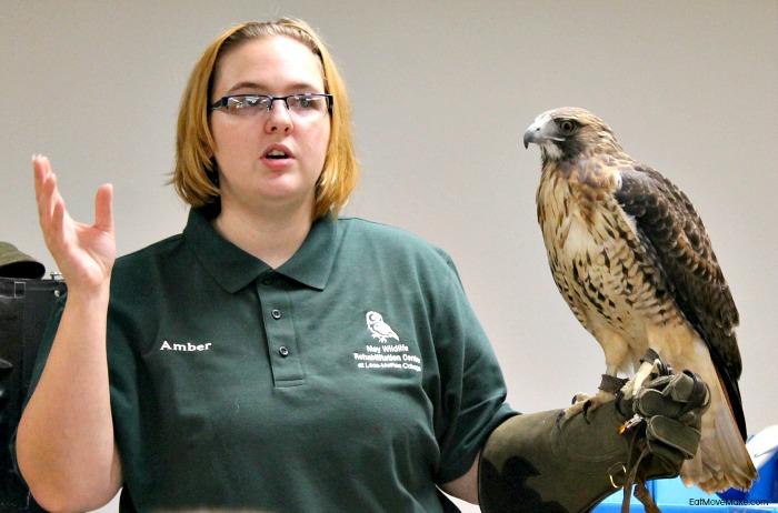 hawk-at-lees-mcrae-wildlife-rehabilitation-center