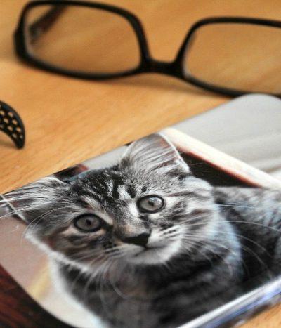 a photo of a cat