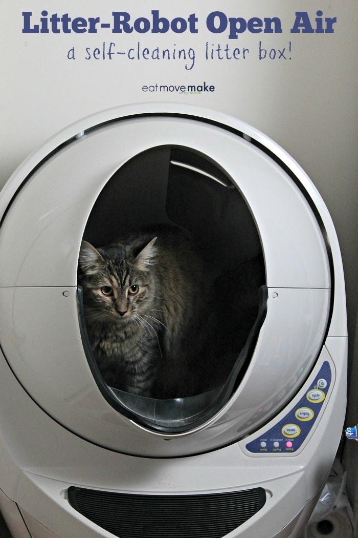 a cat  in litter box