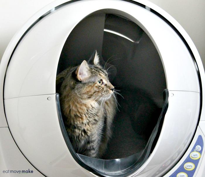 cat-in-litter-robot-open-air