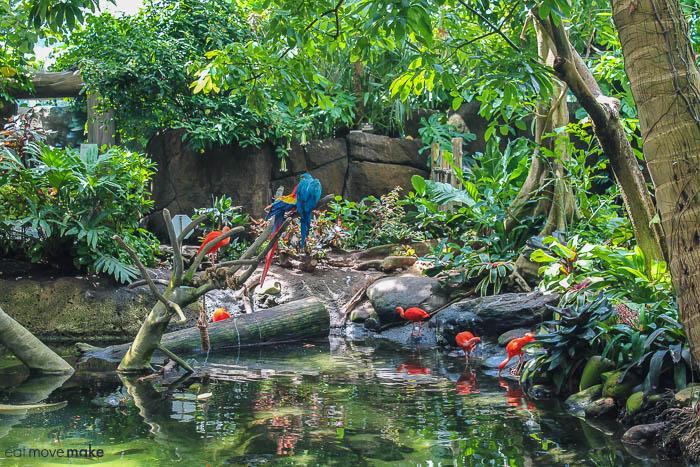 Rainforest pyramid - Moody Gardens
