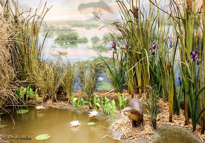 marshlands display