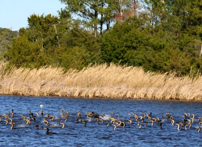 A flock of birds in body of water