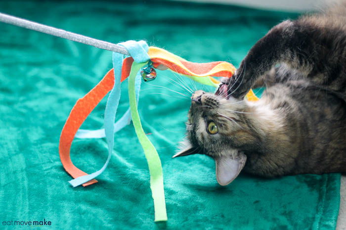 A cat playing with toy