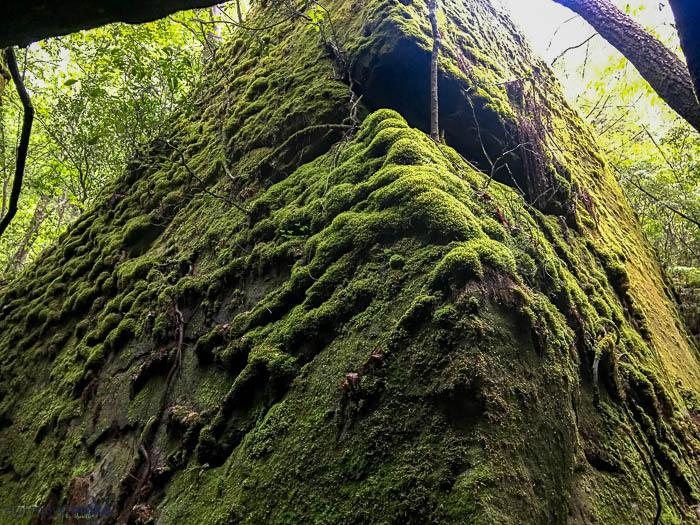 moss and dismalites
