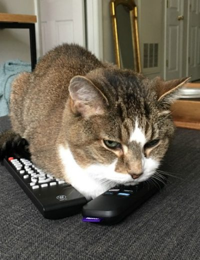 A cat sitting on top of a remote control