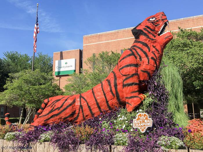 Clemson tiger topiary