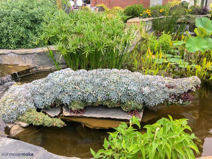 A green plant in a garden