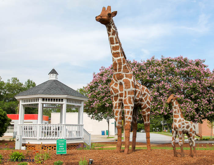 topiaries of giraffes