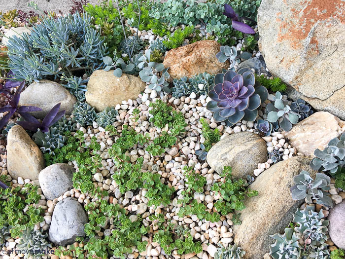 A close up of a succulent garden