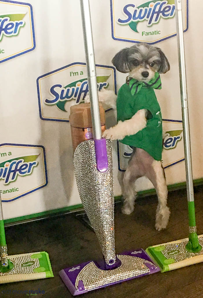 A small dog posing by Swiffer