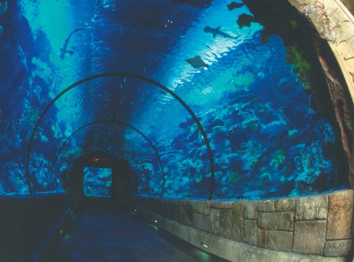 Mandalay Bay Shark Reef Aquarium tunnel