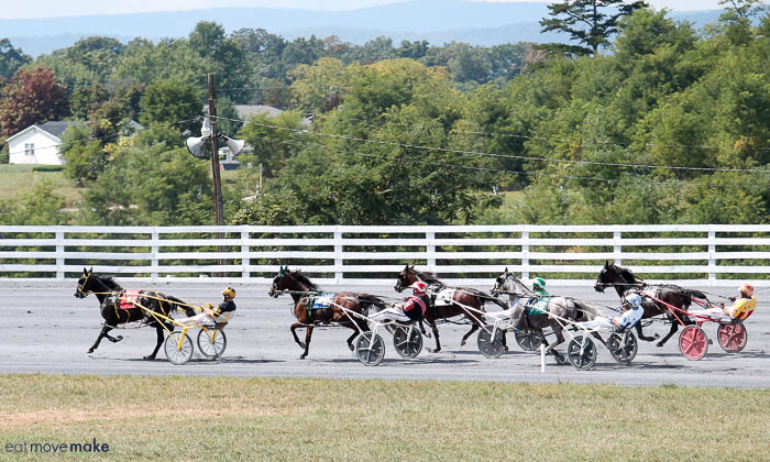 A group of horses racing