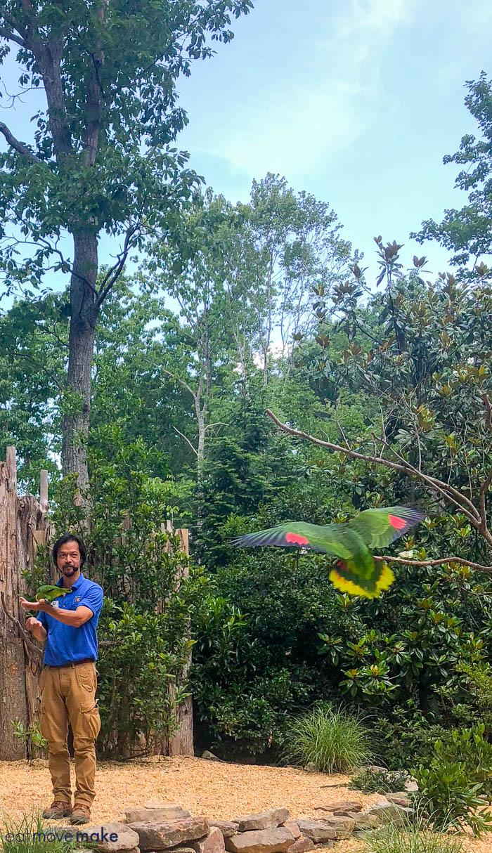 birds in flight at NC Zoo