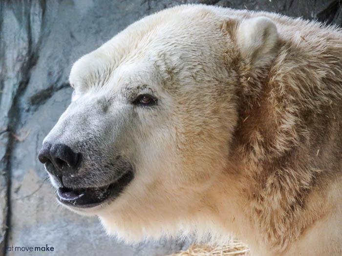 A polar bear l