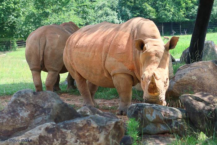 Rhinoceros standing on a rock