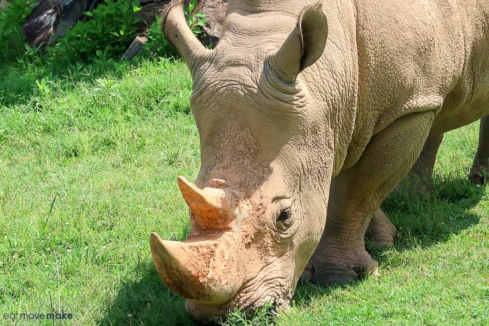 A rhinoceros standing in a field