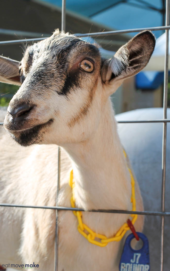 A close up of a goat