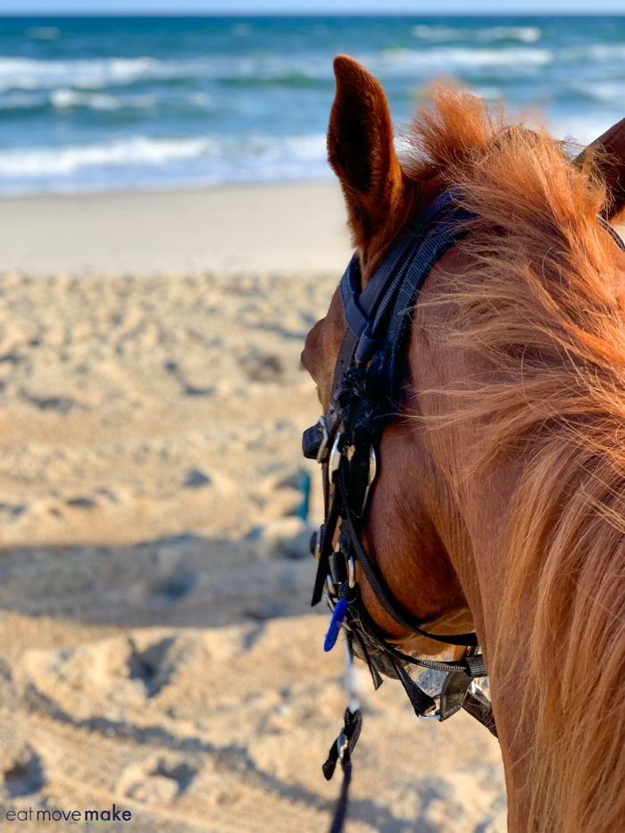 A close up of a brown horse standing on top of a sandy beach