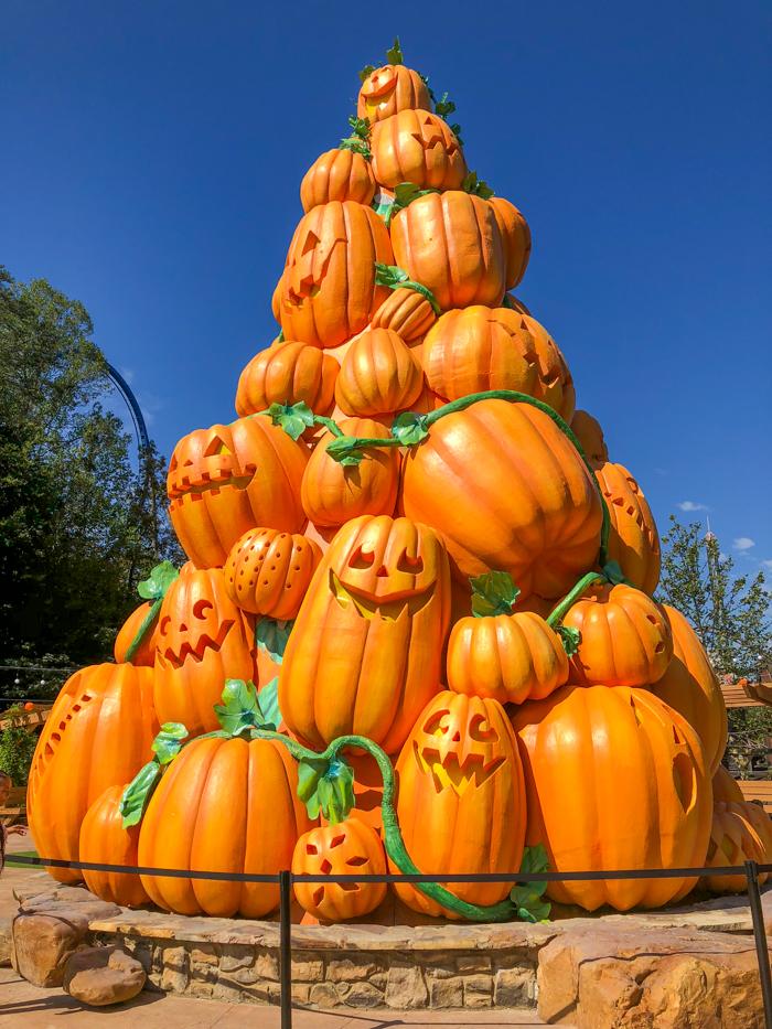 giant pumpkin tree