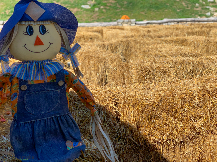 A close up of a scarecrow on top of a dry grass field