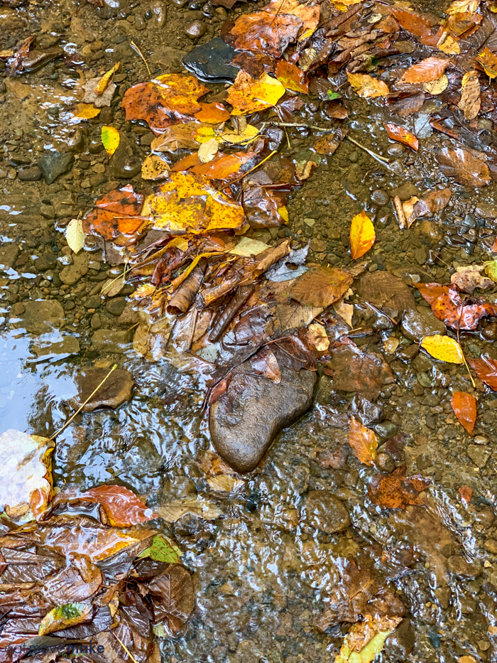 fall leaves and wet rocks by Cucumber Falls