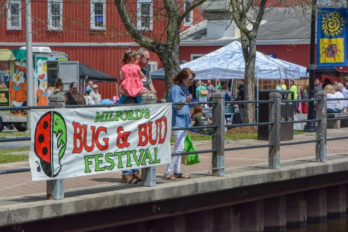 Bug and Bud Festival