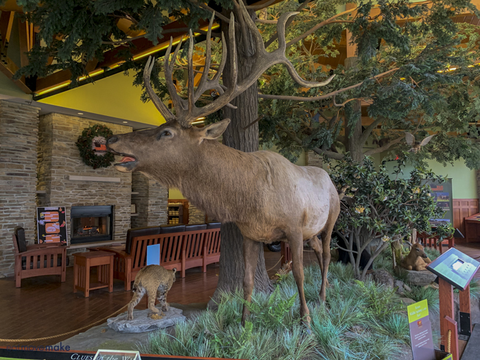 elk display in visitor center