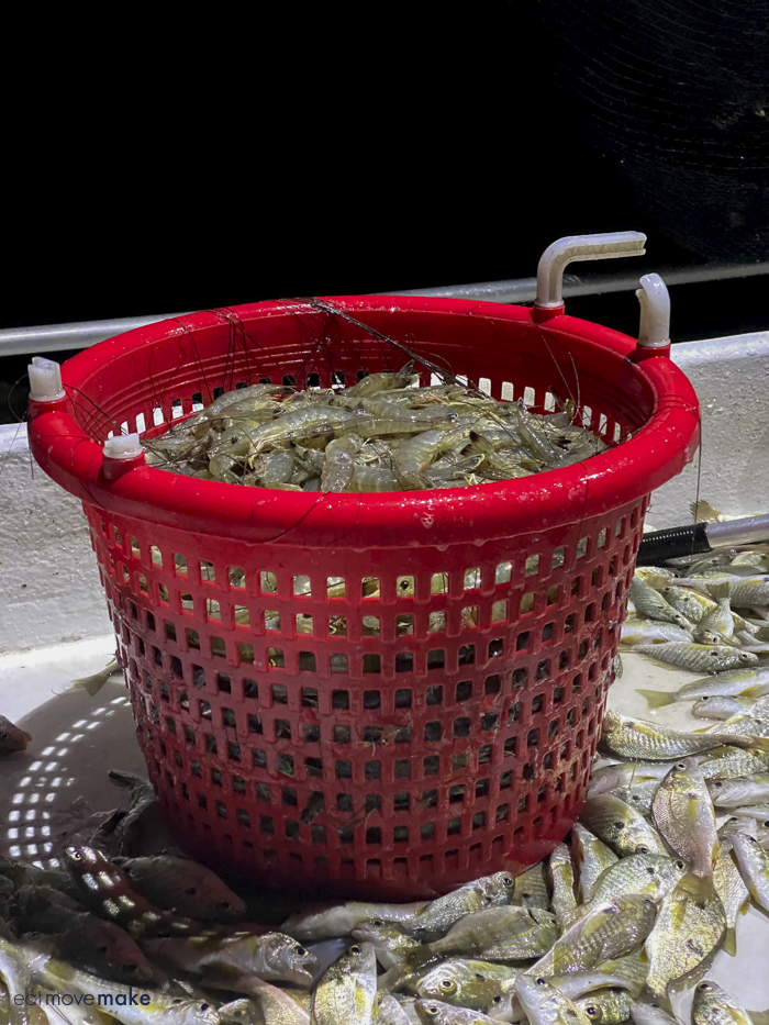bucket of fresh caught shrimp