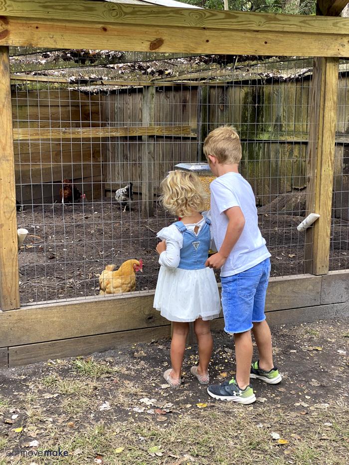 children feeding chickens