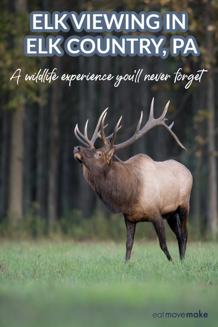 bull elk standing in field
