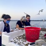 ladies sorting shrimp into bucket