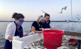 ladies sorting shrimp into bucket