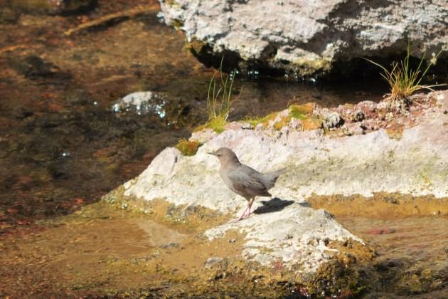 Bird at Falls