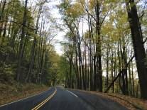 great-smoky-trees-2