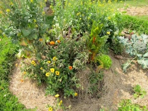 plant guild organic landcare