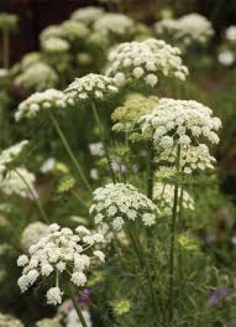 nectar providing plants