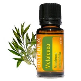 Bottle of Doterra Tea Tree oil with twig in background spring lawn & garden tips