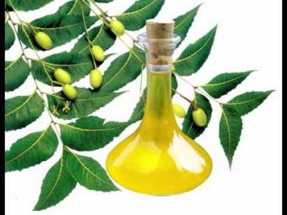 Neem Essential oil in bottle with leaves and seeds