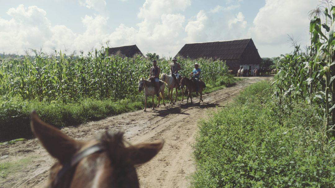 Horse in Viñales