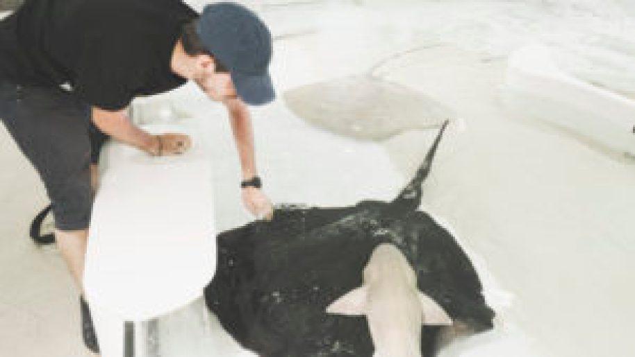 Caresser des raies et des requins à l'aquarium d'Osaka