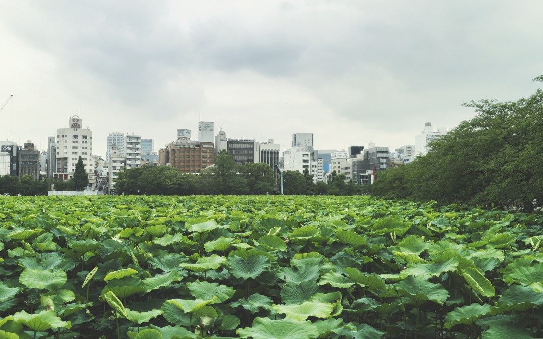 Visiter Asakusa et Ueno les quartiers populaires de Tokyo