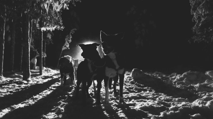 Dogsled at night in Lapland