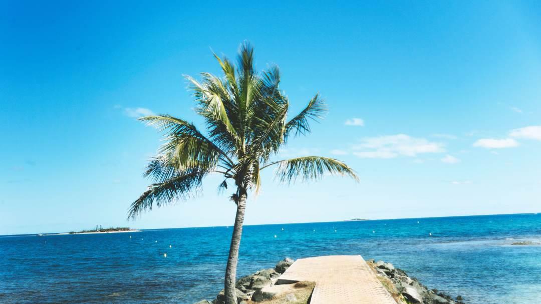 La mer et un palmier à Nouméa