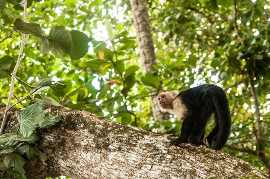 Le Costa Rica par les globe blogueurs