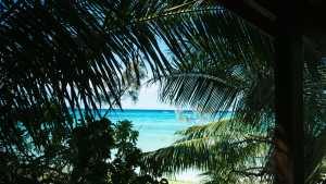 plage entre les palmiers à lifou